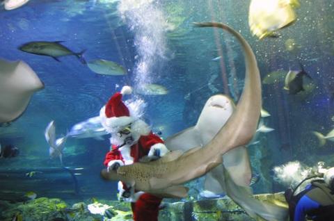 101220-uww-santa-shark.jpg