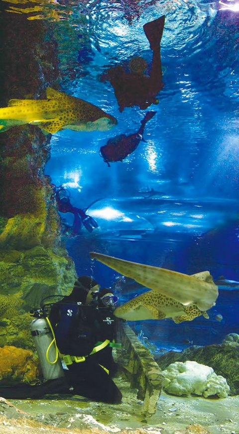 120312-uww-dive-w-shark.jpg