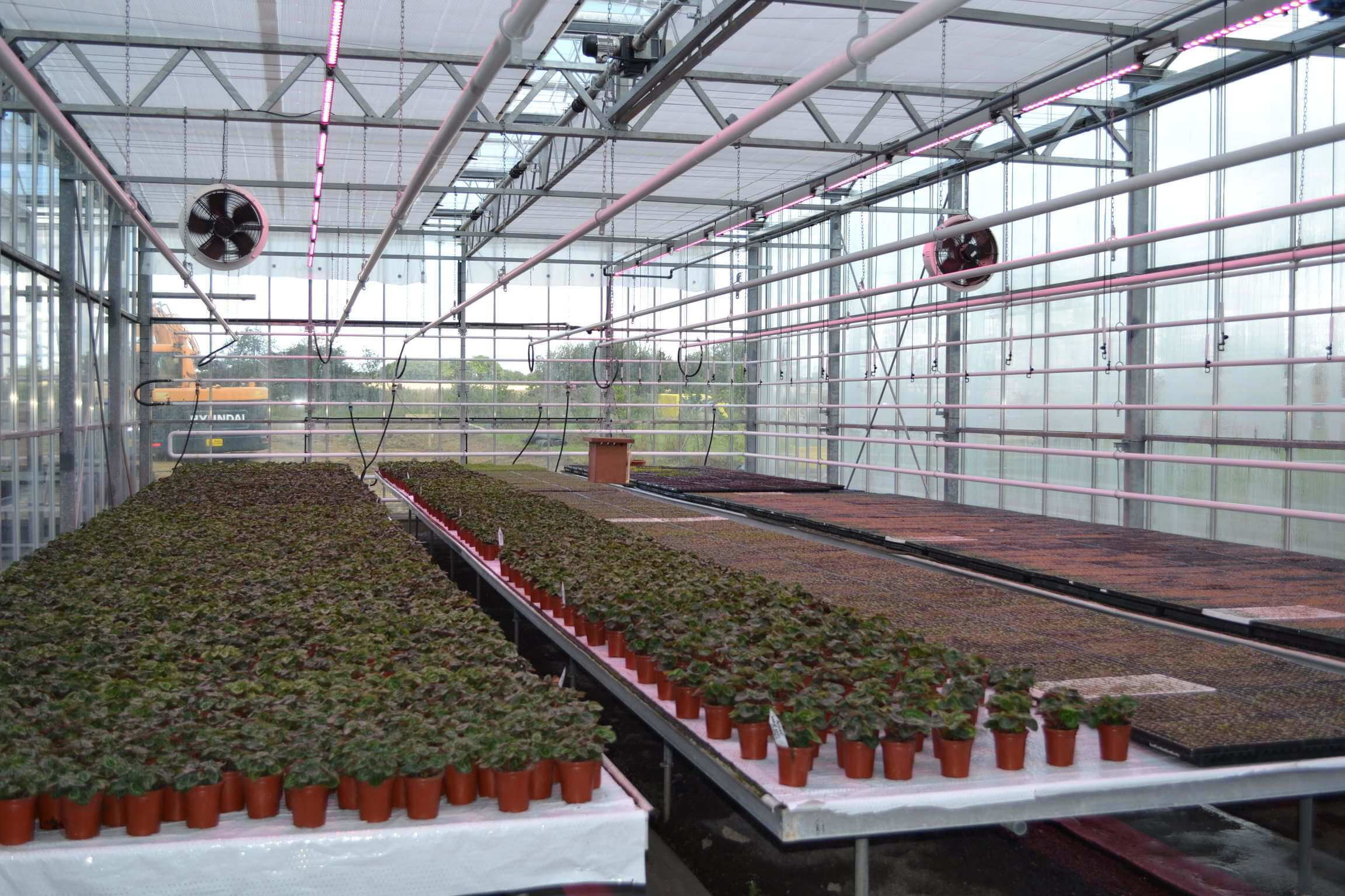 Olivers Plants LED greenhouse screen closed