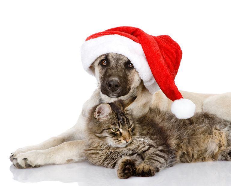Shelter Closed For Christmas And New Years Day The