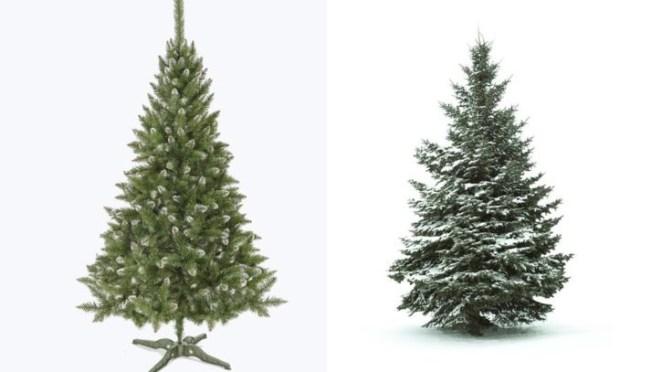 Oh Christmas Tree Oh Christmas Tree!!