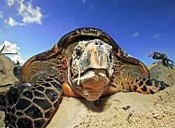 hawksbill_turtle_112664_359649