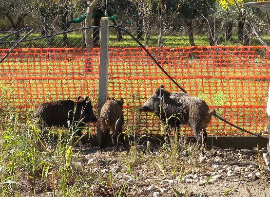 CILENTO - Caccia e fauna, due persone denunciate nel Parco - Gwendalina.tv