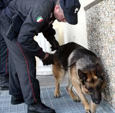 CILENTO - Blitz antidroga, 11 arresti - Gwendalina.tv