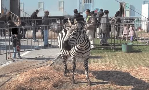 Circo senza animali: mozione della Campania - Gwendalina.tv