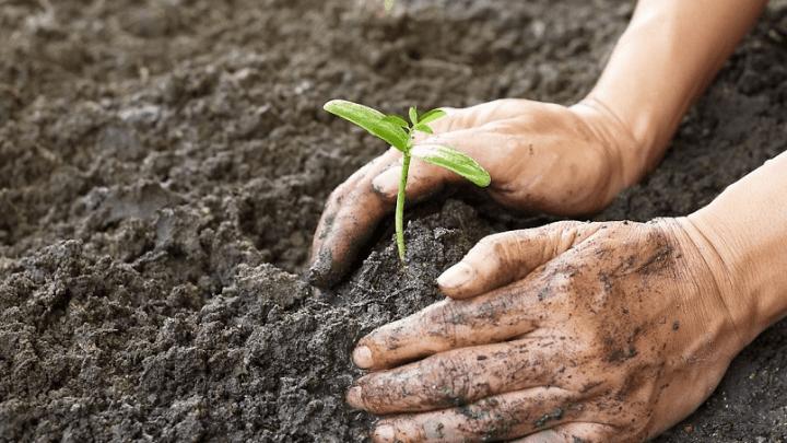 Laurino, i nuovi modelli di produzione agricola