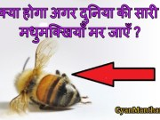 What Would Happen To You If All The Bees Die in Hindi