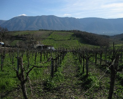 Photo: Vineyards of Campania near Benevento, Italy. Credit: Lisa Borre.