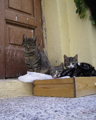 Photo: Cats stand guard over the sleepy hilltop town of Castellonorato. Credit: Lisa Borre.