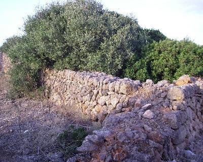 Stone walls on Menorca. Credit: Lisa Borre.
