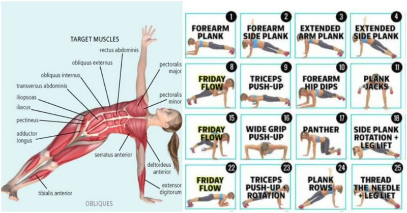 Variation of 6 side planks for a strong defined core for Plank muscles worked diagram
