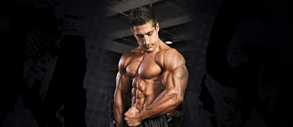 bygga stora muskler