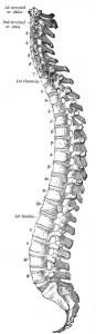 marklyft ryggrad