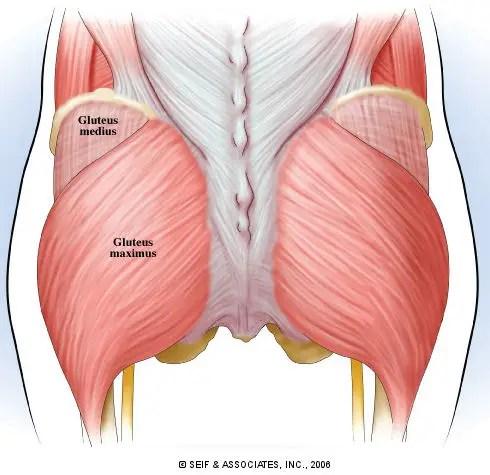 träna rumpa muskler