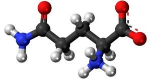 Aminosyror är musklernas byggstenar