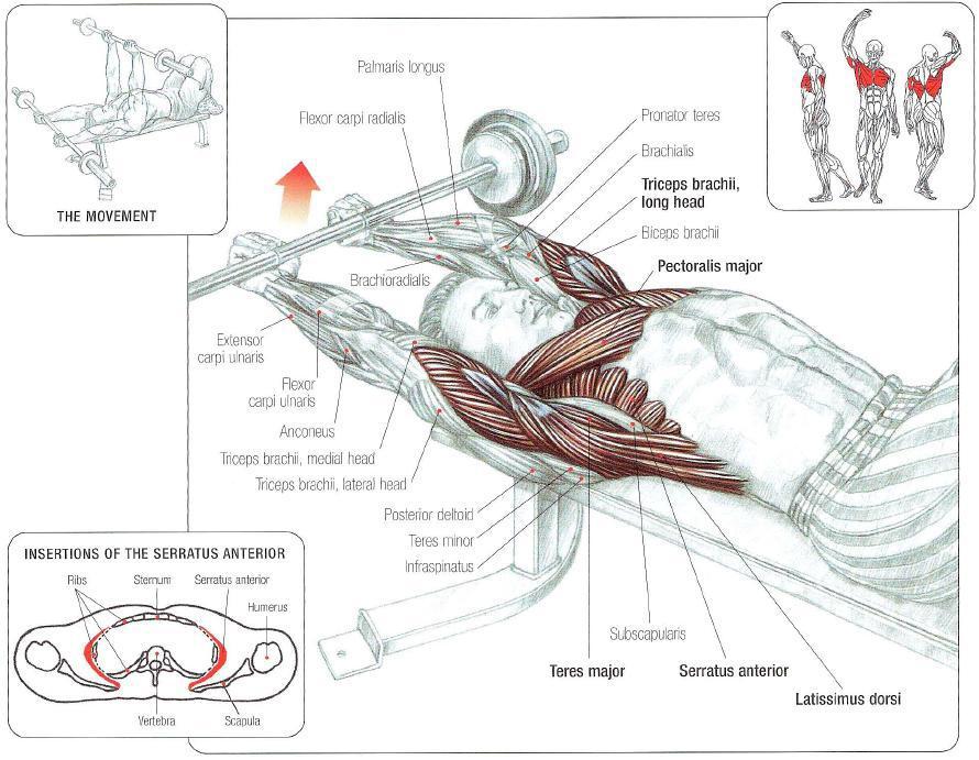 Nice Frederic Delavier Strength Training Anatomy Photo - Anatomy And ...