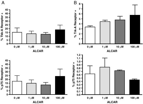 Effect of acetyl-l-carnitine on ovarian cancer cells