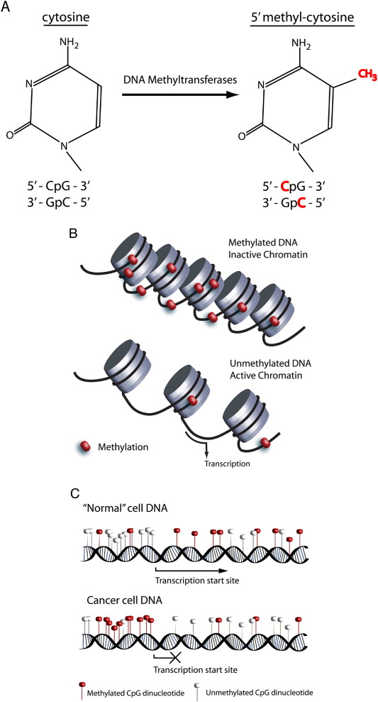 DNA methylation changes in ovarian cancer: Implications