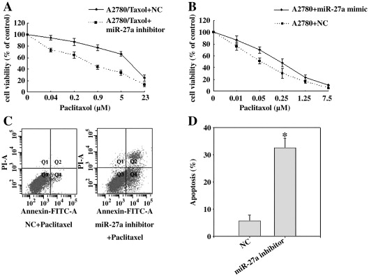 MiR-27a modulates MDR1/P-glycoprotein expression by