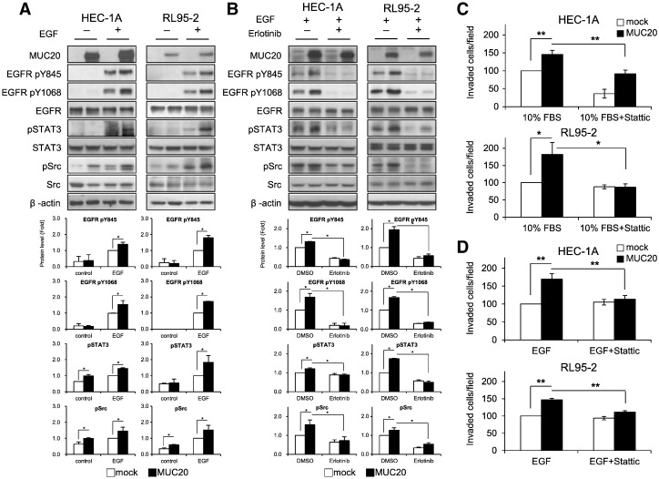 MUC20 overexpression predicts poor prognosis and enhances