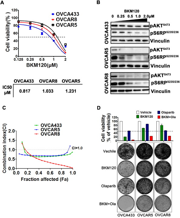 Combined inhibition of PI3K and PARP is effective in the