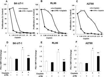 Pharmacologic inhibition of the ataxia telangiectasia