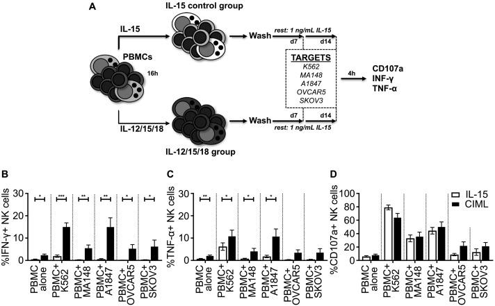 Cytokine-induced memory-like natural killer cells have