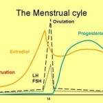 Menopauze endokrinologie