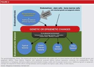 Pathophysiology of endometriosis: The genetic epigenetic theory