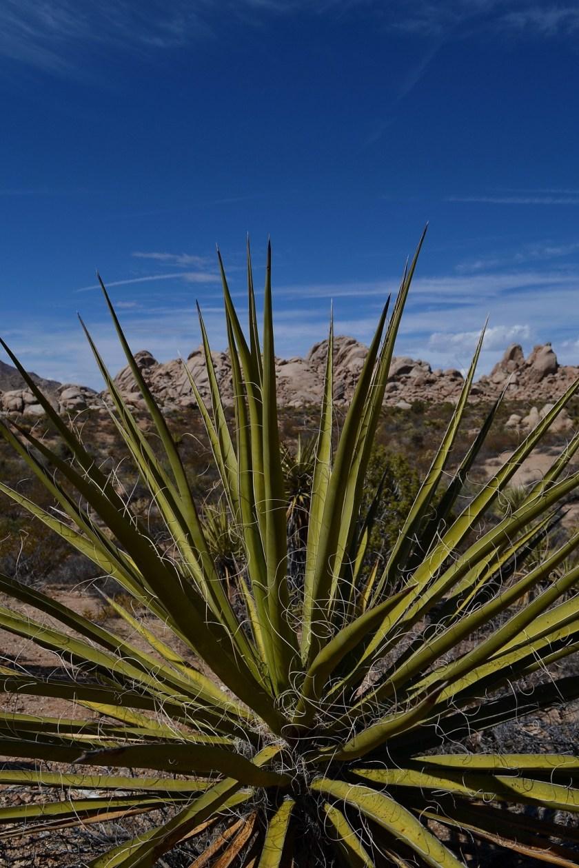 8-mojave-desert-plant-spikey-barren