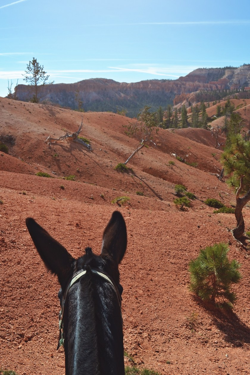 bryce-canyon-trail-riding-6