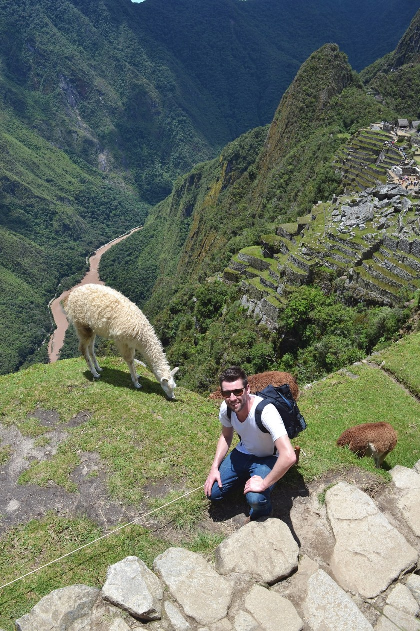 huayna-picchu-overlooking-machu-llama-greg2