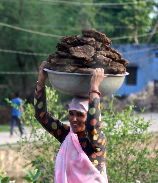 carrying cow dung
