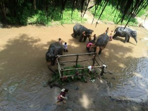 Bathing elephants at Patara elephant farm
