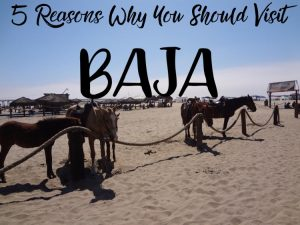 5 Reasons why you should visit Baja cover photo