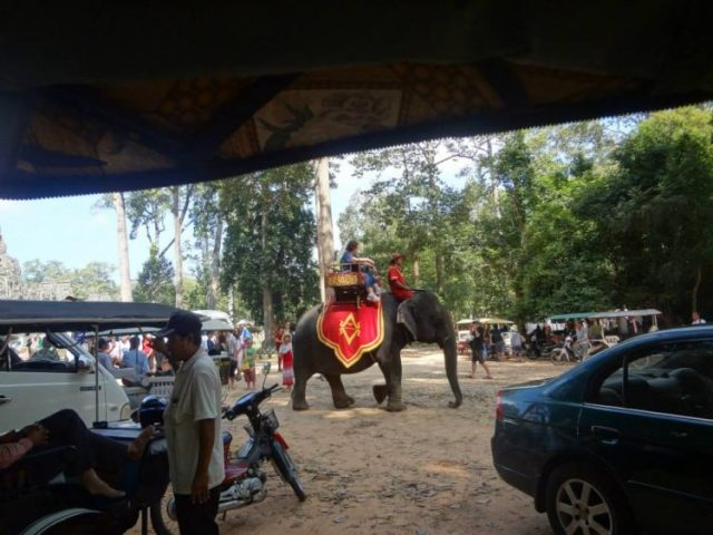 tourist ride an elephants in Cambodia
