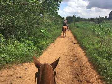 Horseback riding in Viñales