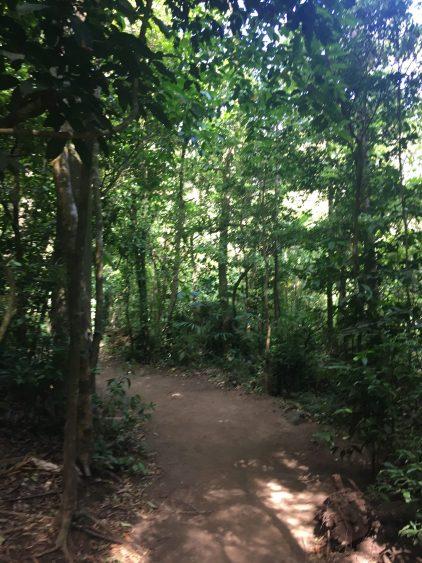 nature trail costa rica