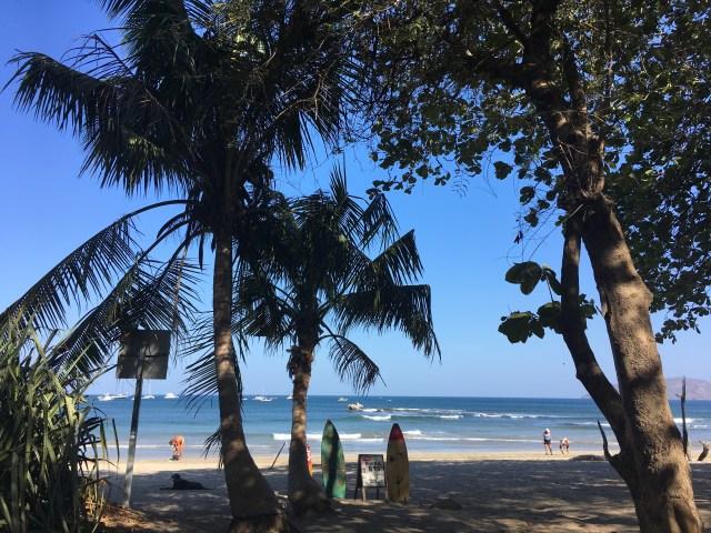 palm trees tamarindo