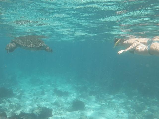 galapagos sea turtles