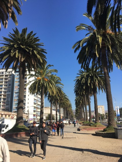 palm trees vina del mar