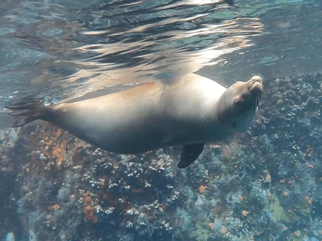 sea lion galapagos kicker rock_