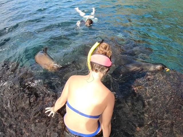 sea lion snorkel