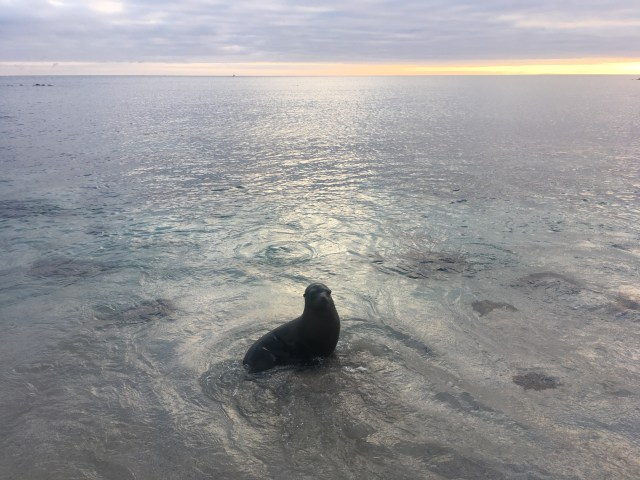 sunset sealion