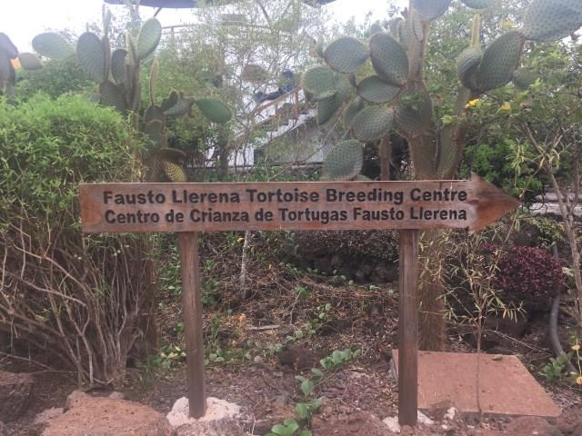 tortuga breeding center
