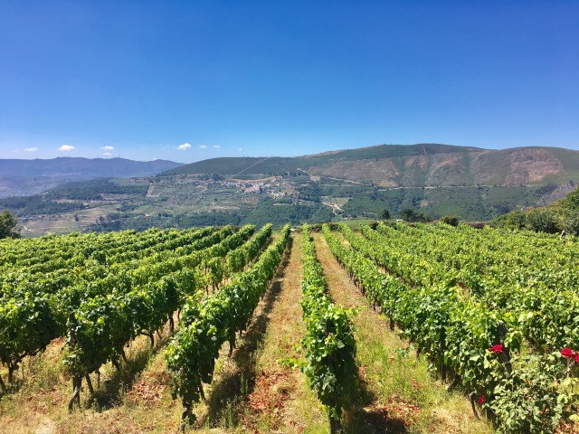 portugal vineyards