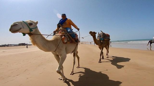 essaouira beach camels