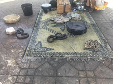 snakes morocco