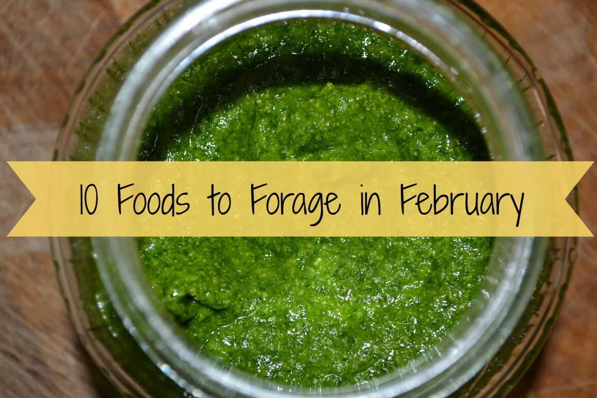 10 Foods to Forage in February - Free Food