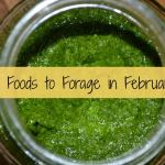 10 Foods to Forage in February – Free Food